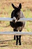 Petit âne Photographie stock libre de droits