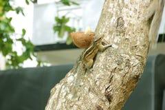 Petit écureuil Photos stock