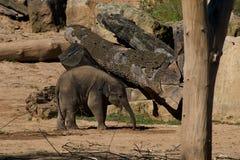 Petit éléphant mignon jouant autour dans la nature Image libre de droits