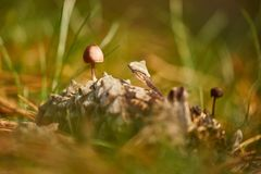 Petit élevage de champignon Photo libre de droits