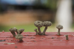Petit élevage de champignon Image libre de droits