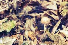 Petit élevage de champignon Photos stock