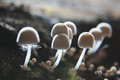 Petit élevage fongueux de dessous la terre humide Photo stock