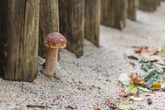 Petit élevage mignon de champignon Photographie stock libre de droits
