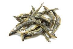 Petit éperlan d'arc-en-ciel salé de poissons Photo libre de droits
