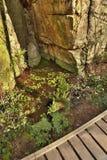 Petit étang à la roche dans le secteur de touristes de kraj de Machuv de vallée de Peklo au printemps dans la République Tchèque Photo stock
