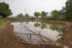 Petit étang Photographie stock libre de droits