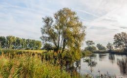 Petit étang naturel tôt le matin Photographie stock libre de droits
