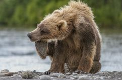 Petit animal d'ours Photographie stock