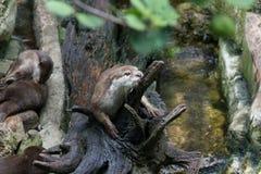 petit animal de naga sur la branche Images stock