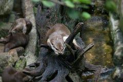 petit animal de naga sur la branche Images libres de droits