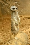 Petit animal drôle Photographie stock