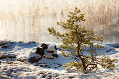 Petit arbre à la lumière du soleil chaude d'hiver de bord de lac photo stock