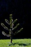 Petit arbre Photographie stock