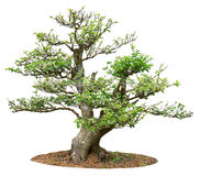 Petit arbre Image stock