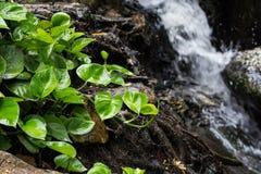 Petit arbre avec la cascade Image libre de droits