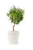 petit arbre décoratif photo stock