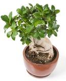Petit arbre décoratif photo libre de droits