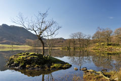 Petit arbre d'isolement sur l'eau de Rydal image libre de droits