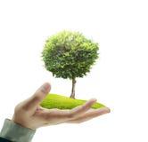 Petit arbre dans une main images stock