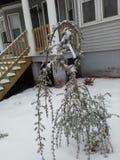Petit arbre de abattement couvert de neige photographie stock