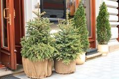Petit arbre de sapin à feuilles persistantes mis en pot de Noël près de maison, décor de vacances photographie stock libre de droits