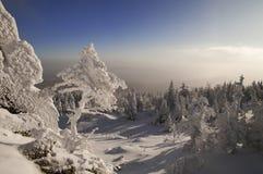 Petit arbre de sapin congelé s'élevant dans les roches Image libre de droits