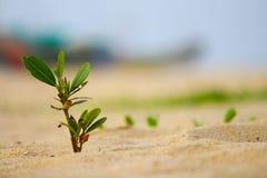 Petit arbre en plage Photographie stock libre de droits