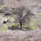 Petit arbre et une colonne, Jelenia Gora, Pologne Photos libres de droits