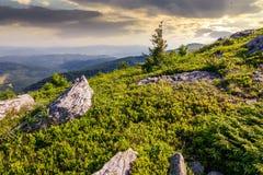 Petit arbre impeccable parmi les roches image libre de droits