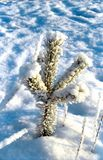 petit arbre neigé de pin Image stock