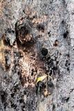 Petit arbre rené dans la forêt photo libre de droits
