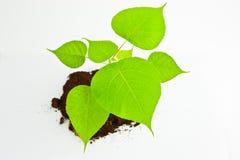 Petit arbre vert Photo libre de droits