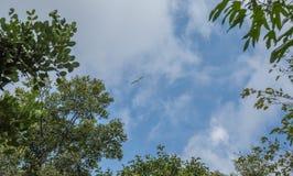 Petit avion de recherche repéré dans le ciel image stock
