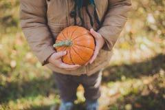 Petit bébé garçon en parc d'automne avec le potiron, amis jouant en parc Image stock