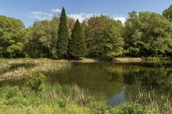 Petit barrage en beau parc du sud Image stock
