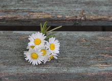 Petit bouquet de marguerite Photographie stock