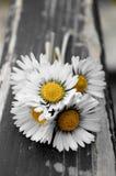 Petit bouquet de marguerites Photos stock