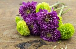 Petit bouquet des chrysanthèmes verts et pourpres Photographie stock