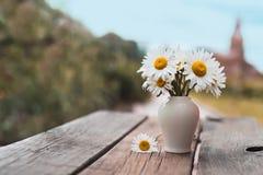 Petit bouquet des marguerites photographie stock libre de droits