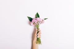 Petit bouquet des oeillets roses dans une main femelle avec un manicur Photos stock