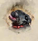 Petit Brabancon dog. Home pet. Petit Brabancon dog. Watercolor background Royalty Free Stock Image
