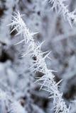 Petit branchement couvert de gelée Photographie stock libre de droits
