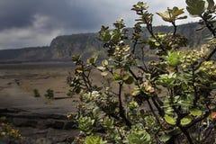 Buisson de volcan photos stock