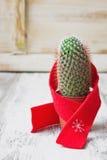 Petit cactus Images stock