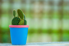 Petit cactus Photo stock