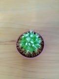 Petit cactus Photo stock