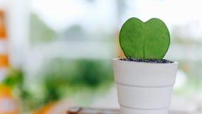 Petit cactus avec la forme de coeur Photo libre de droits