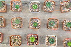 Petit cactus dans le bac Photo libre de droits