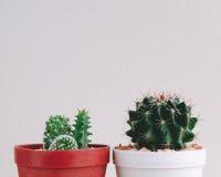 Petit cactus dans le bac Photographie stock